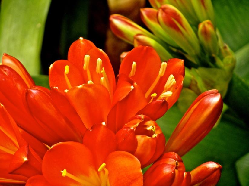 Sunburst Petals