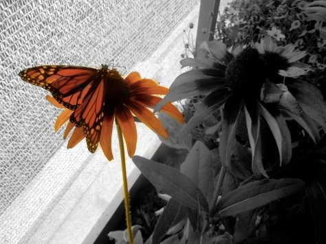 Butterfly Focus