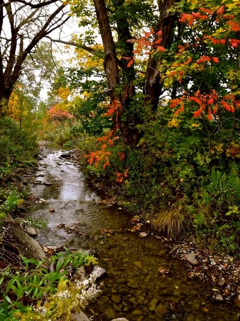 Secret Creek