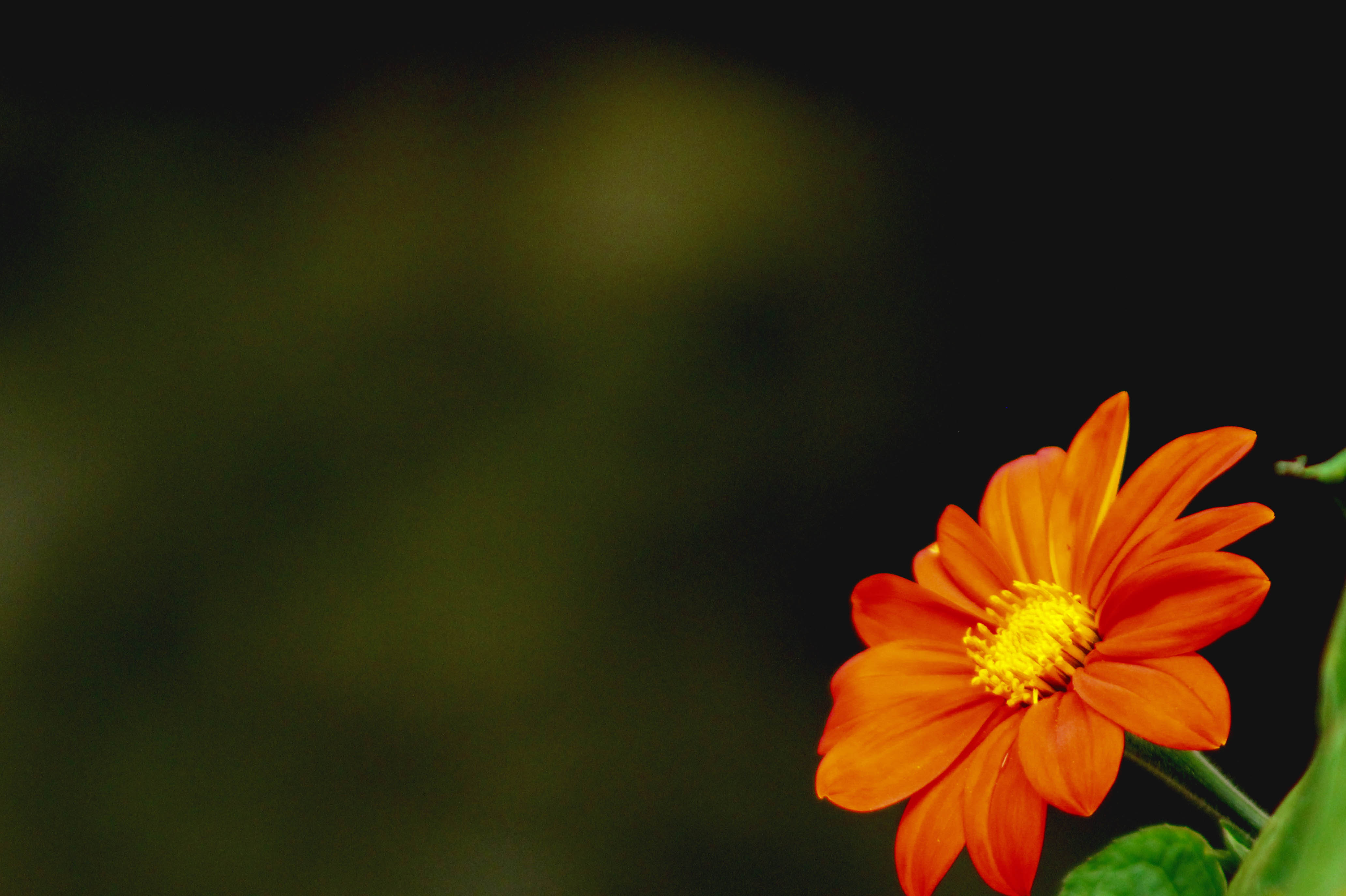 flower blooming into darkness